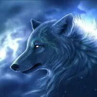 Frozen Wolf's Photo