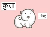 baby dog's Photo